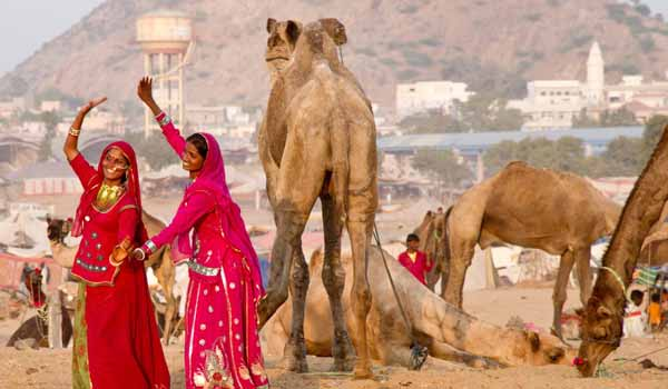 About Camel Fair